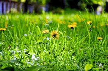 plantas y condimentos beneficiosos