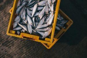 grasas de pescado